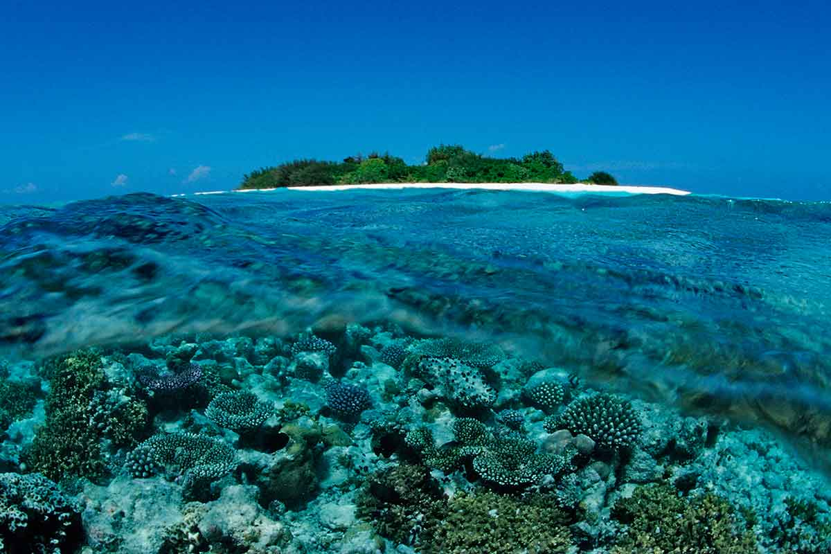 maldives-reef